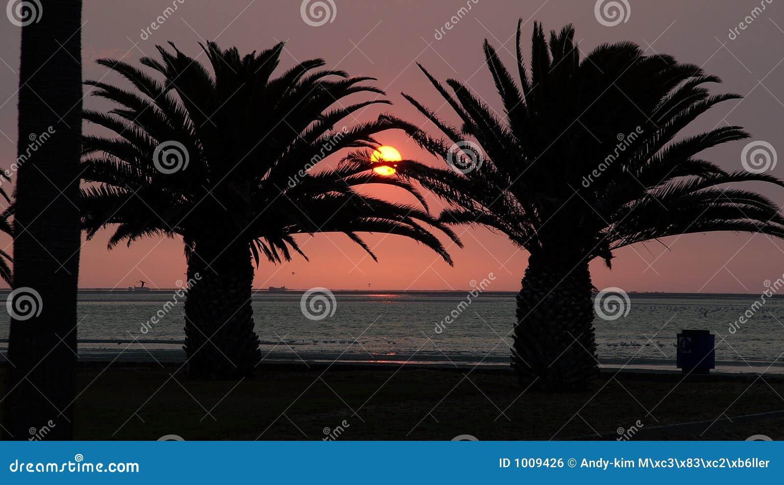 Coucher du soleil dans des paumes