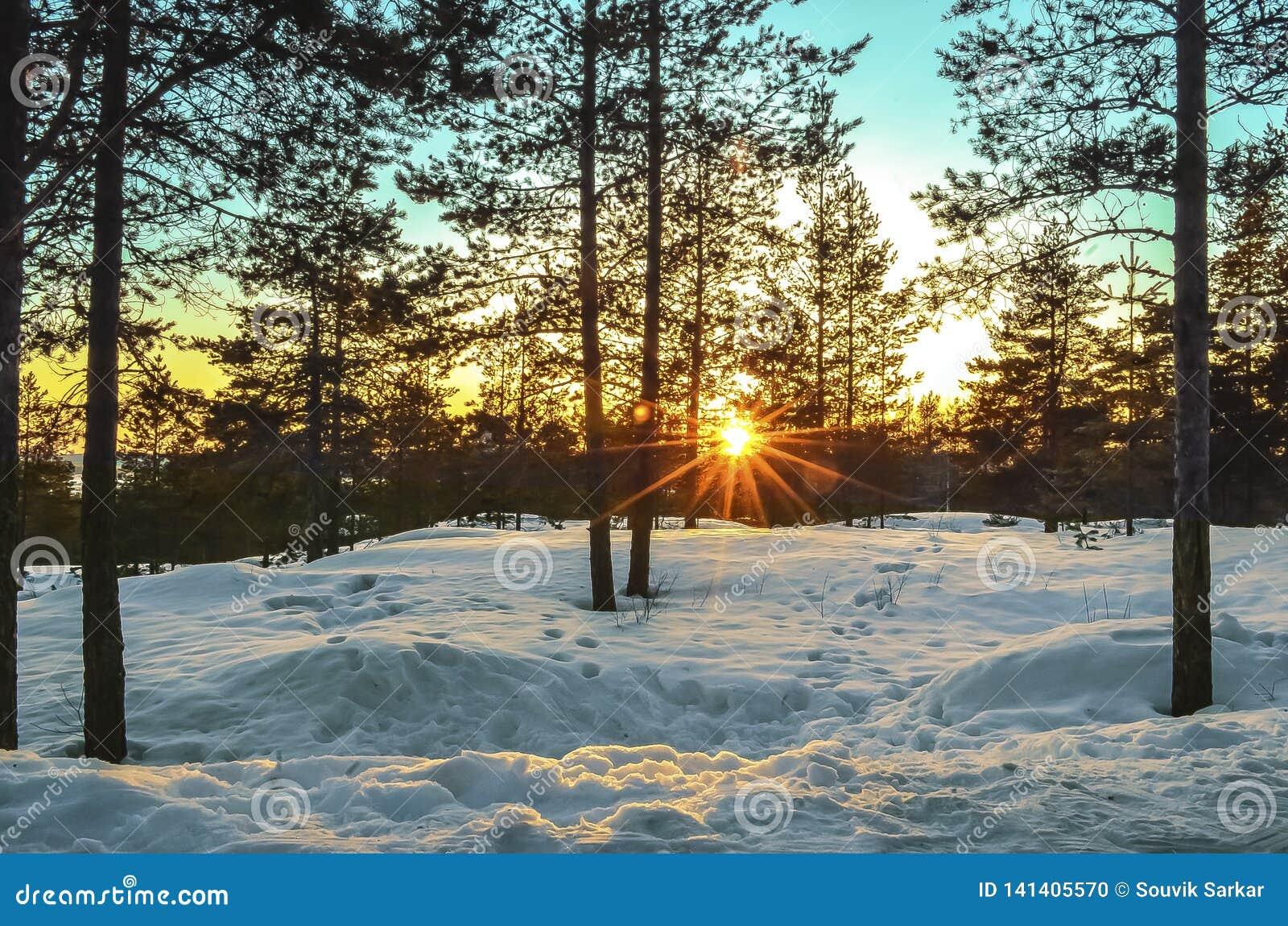 Coucher du soleil dans l horizon par les bois