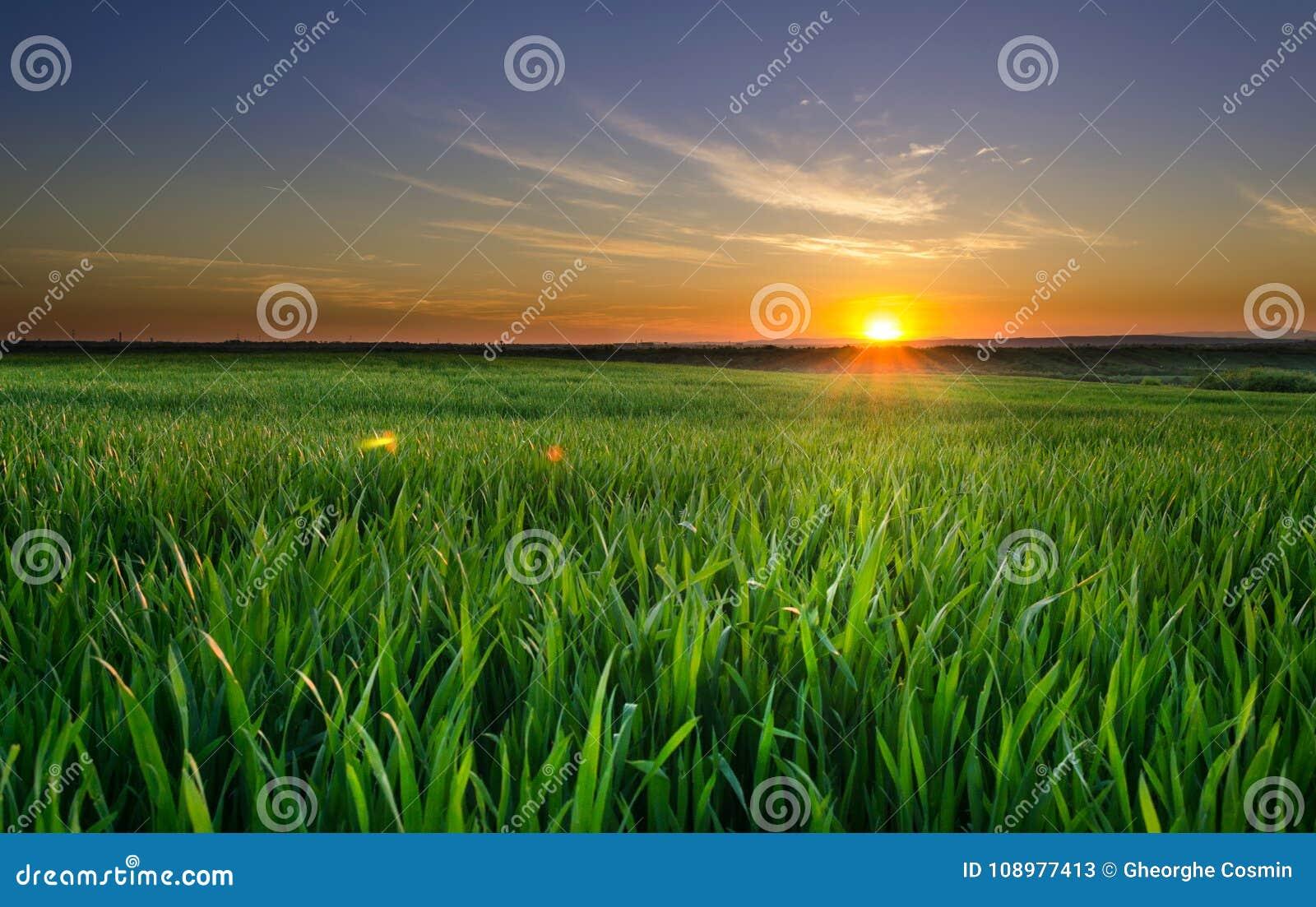 Coucher du soleil dans le domaine de blé