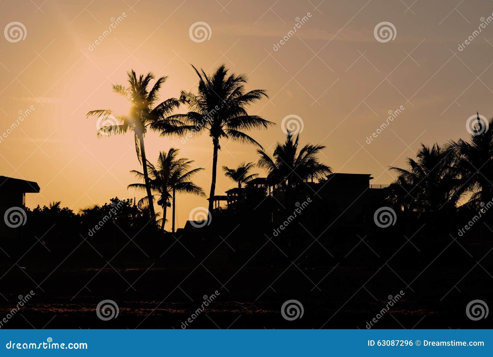 Download Coucher Du Soleil De Palmiers De Miami, La Floride Photo stock - Image du miami, sunset: 63087296