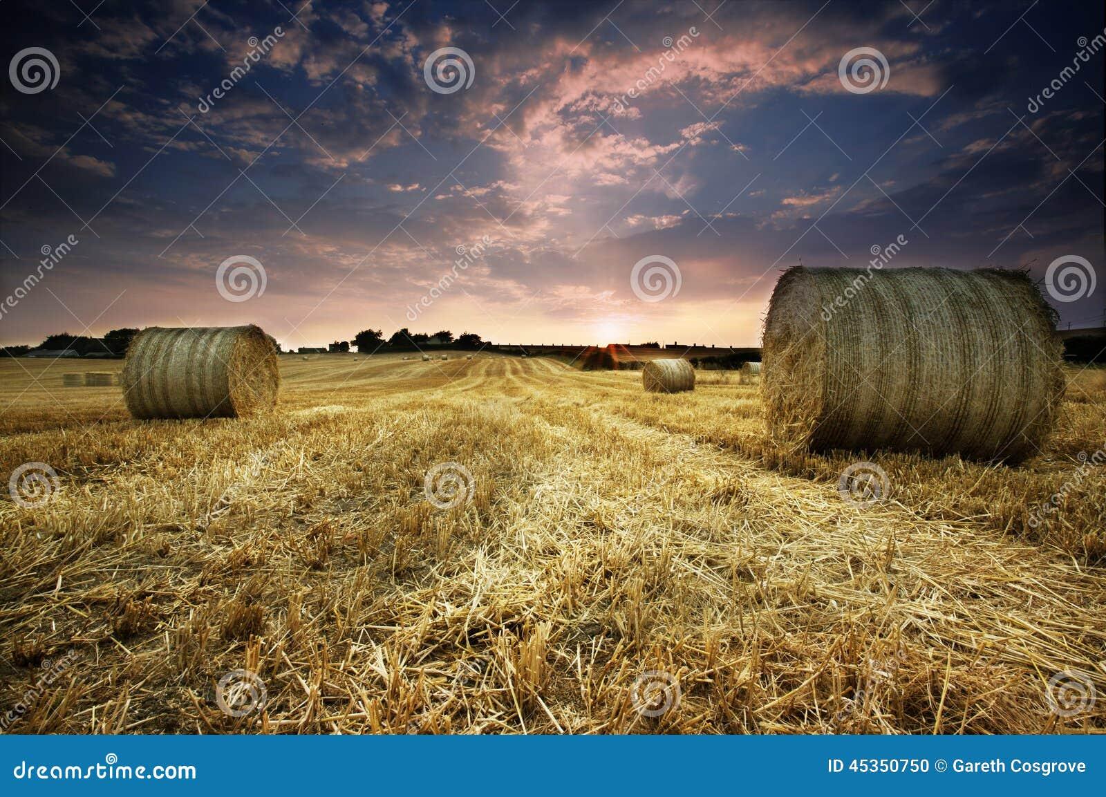 Coucher du soleil de récolte