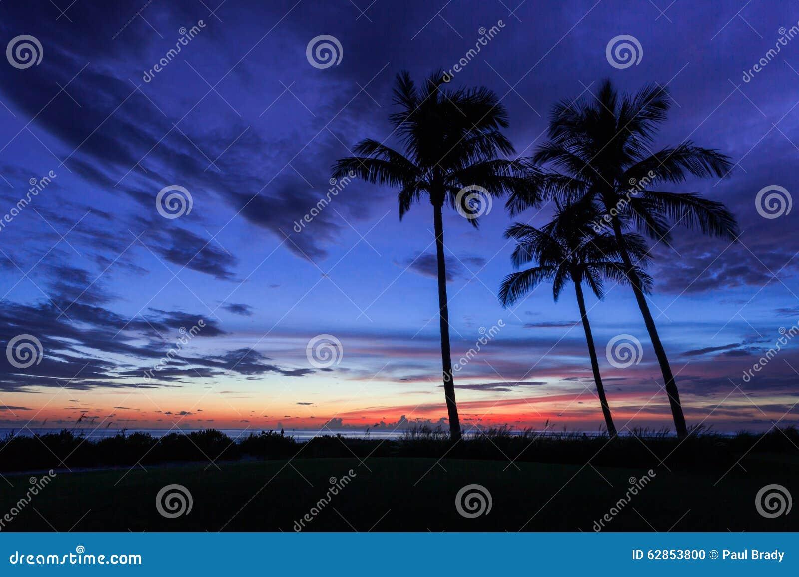 Coucher du soleil de silhouette tropical