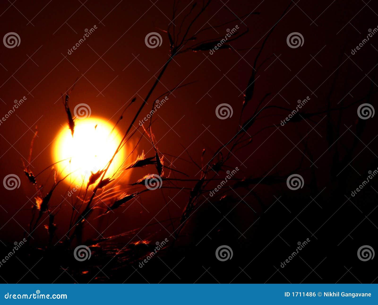Coucher du soleil herbeux