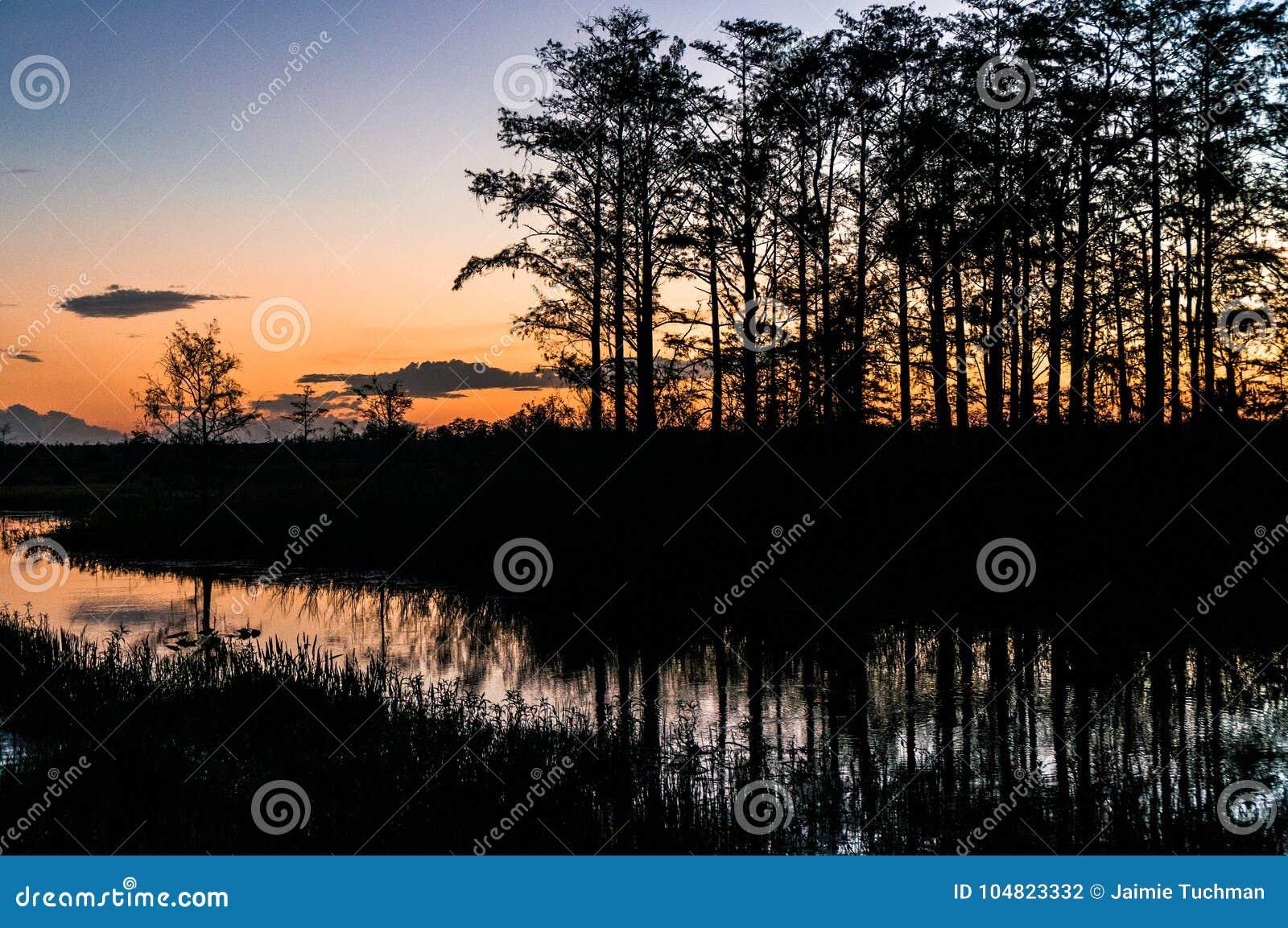 Coucher du soleil par les arbres des marais