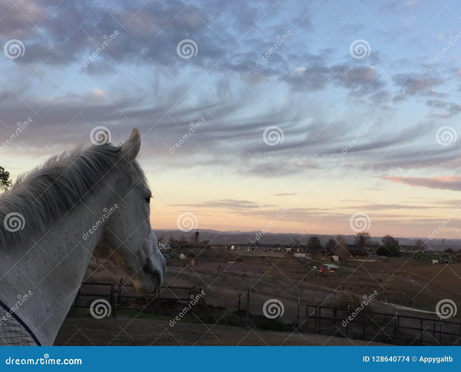 Coucher du soleil rose stupéfiant de ciel avec le cheval utilisant une couverture noire
