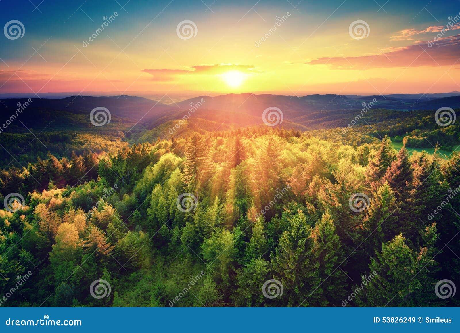 Coucher du soleil scénique au-dessus de la forêt