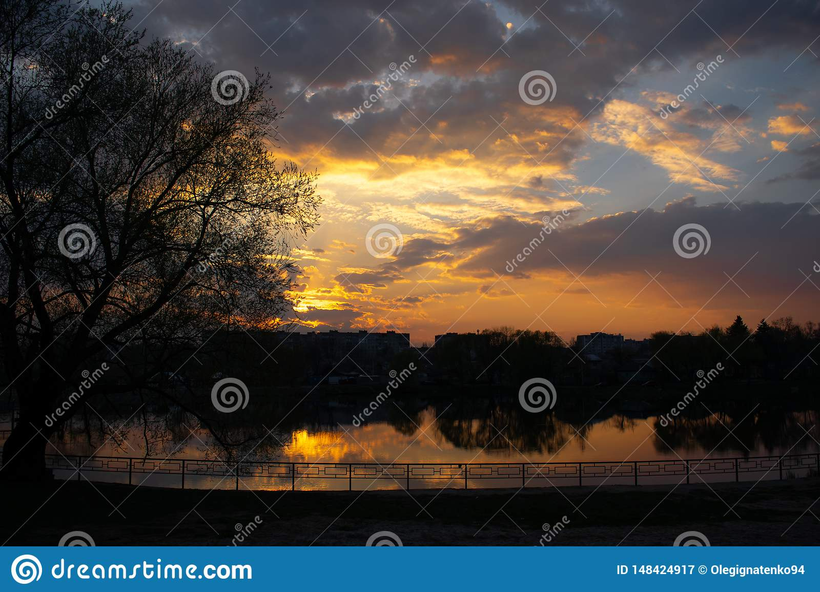 Coucher du soleil sur la rive avec l arbre