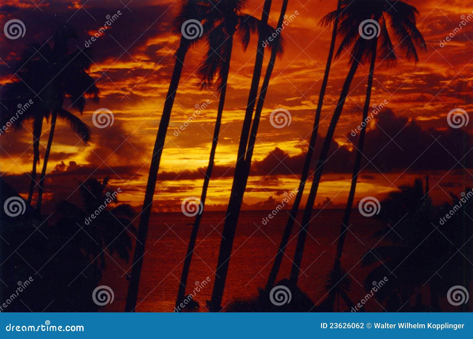 Coucher du soleil Tahiti de Palmtree