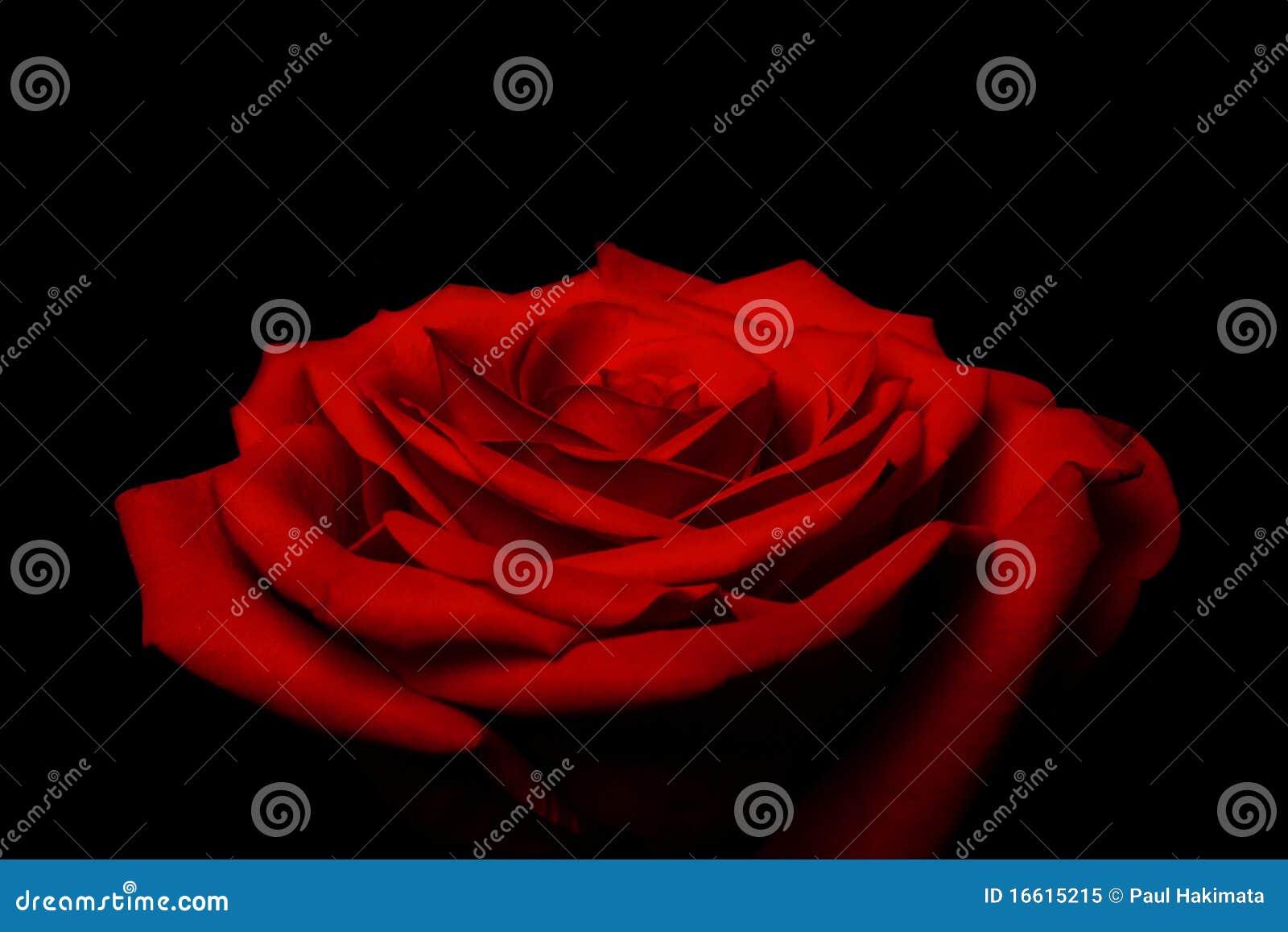 Couches de pétales d amour - le rouge a monté