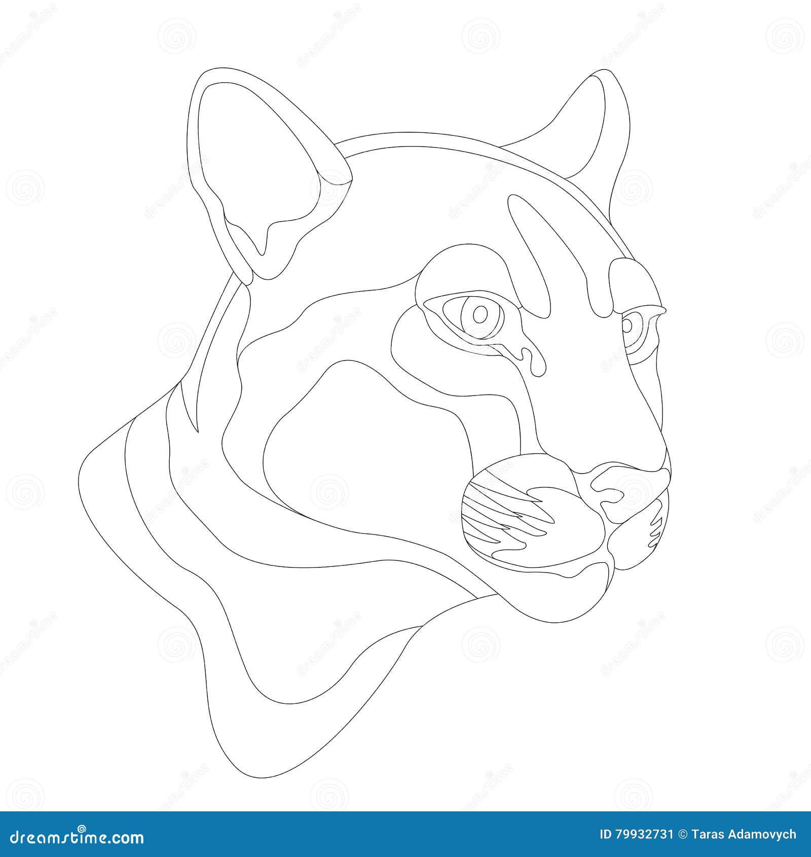 Cougar Face Line Drawing : Cougar head vector illustration cartoondealer