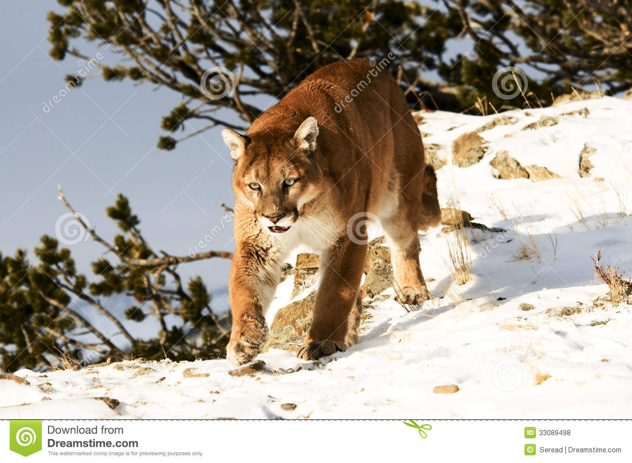 the lion in winter an analysis The lion in winter storyform synopsis: 1183 ad: king henry ii's three sons  all want to inherit the throne, but he won't commit to a choice they and his wife.