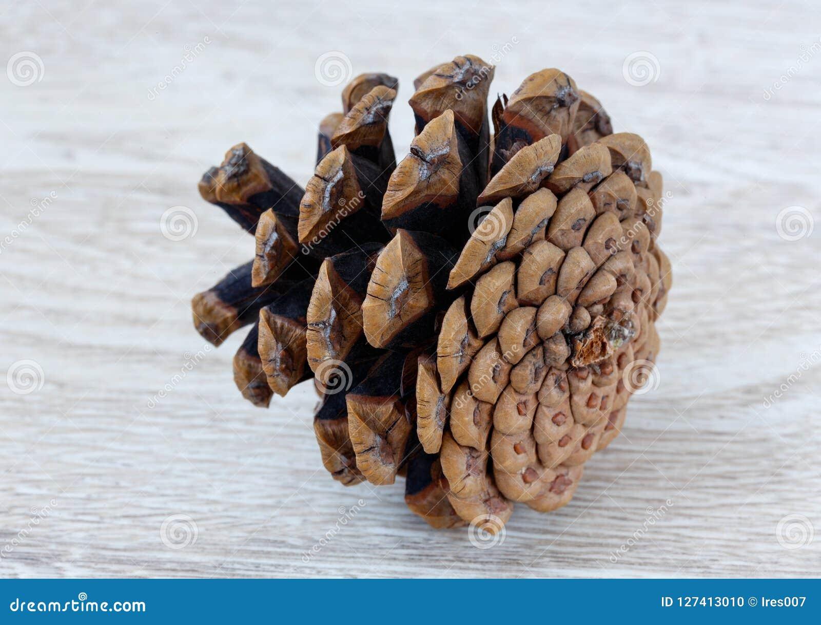 Couleur de brun de cône de cèdre