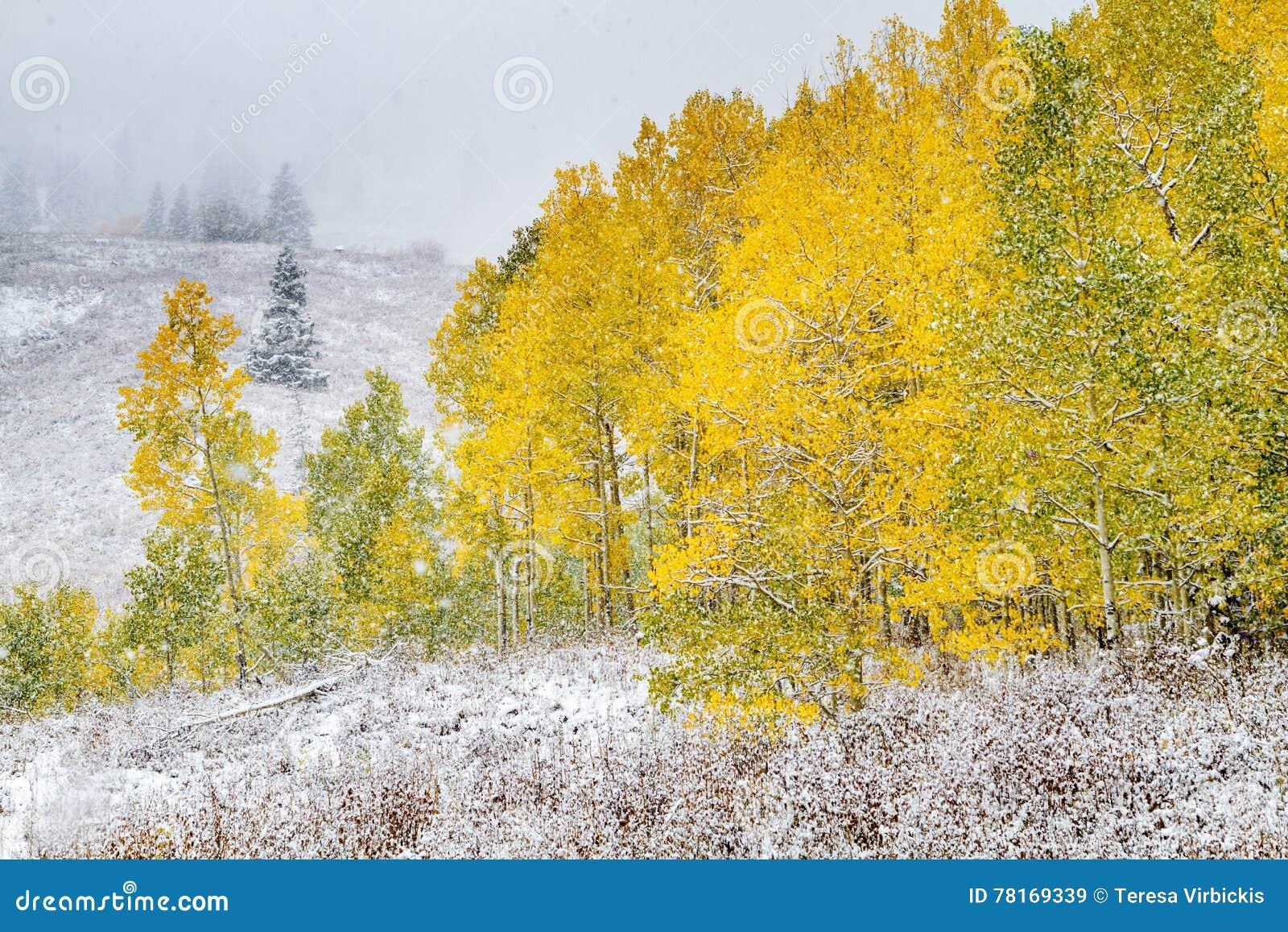 Couleur et neige de chute dans le Colorado