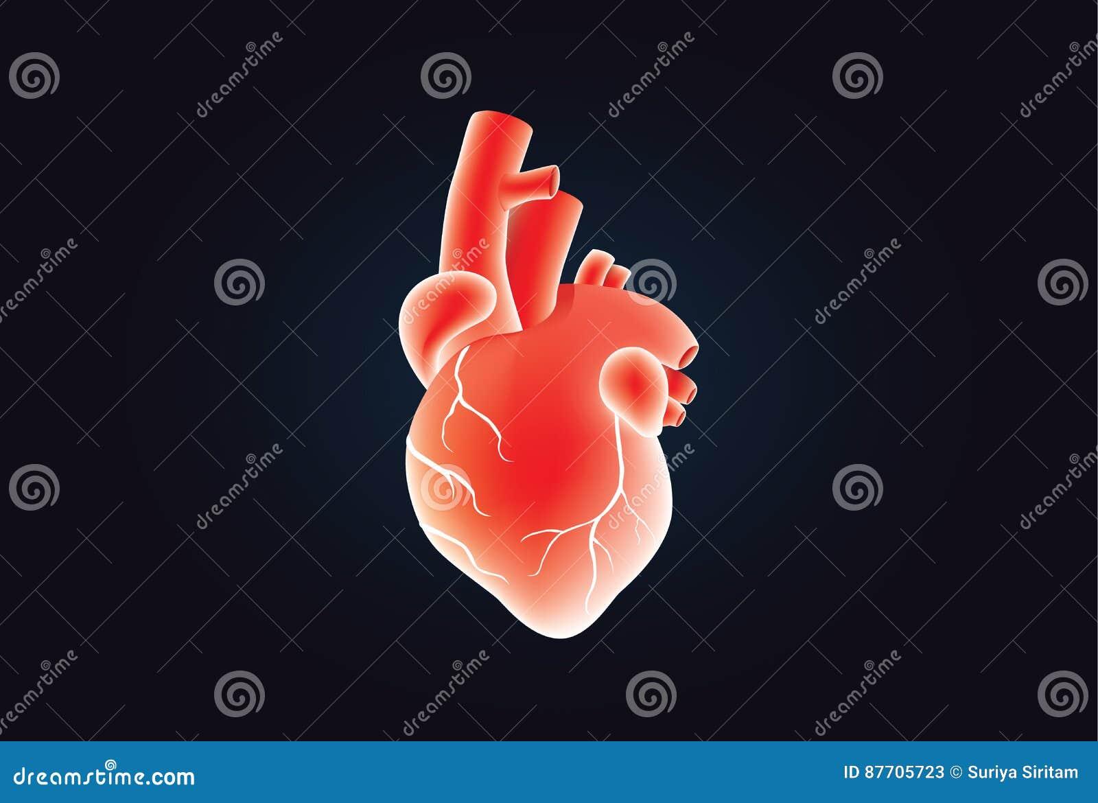 Couleur rouge de vecteur humain de coeur sur le noir