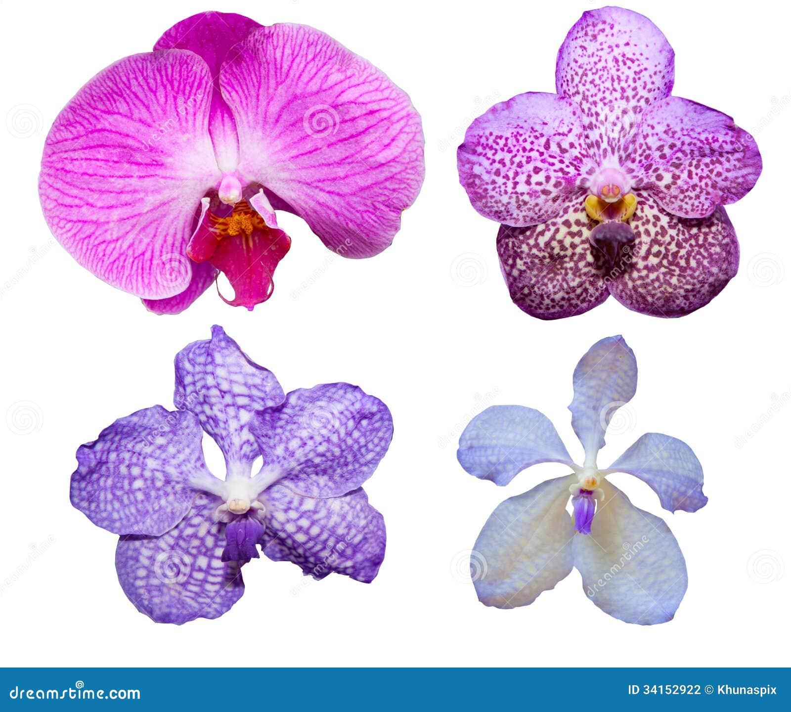 couleur tropicale et sorte de vari t s de fleur d 39 orchid e d 39 isolement sur le petit morceau. Black Bedroom Furniture Sets. Home Design Ideas