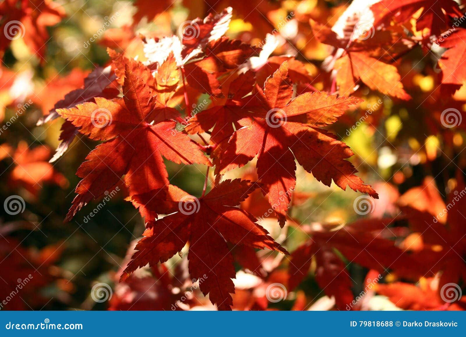 Couleurs 9 d automne