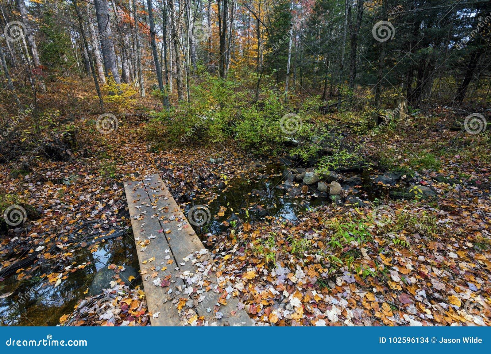 Couleurs de chute dans des chênes de géant de Canada d Ontario