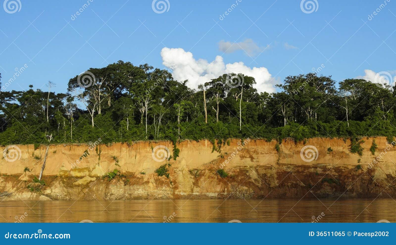Couleurs tropicales de jungle