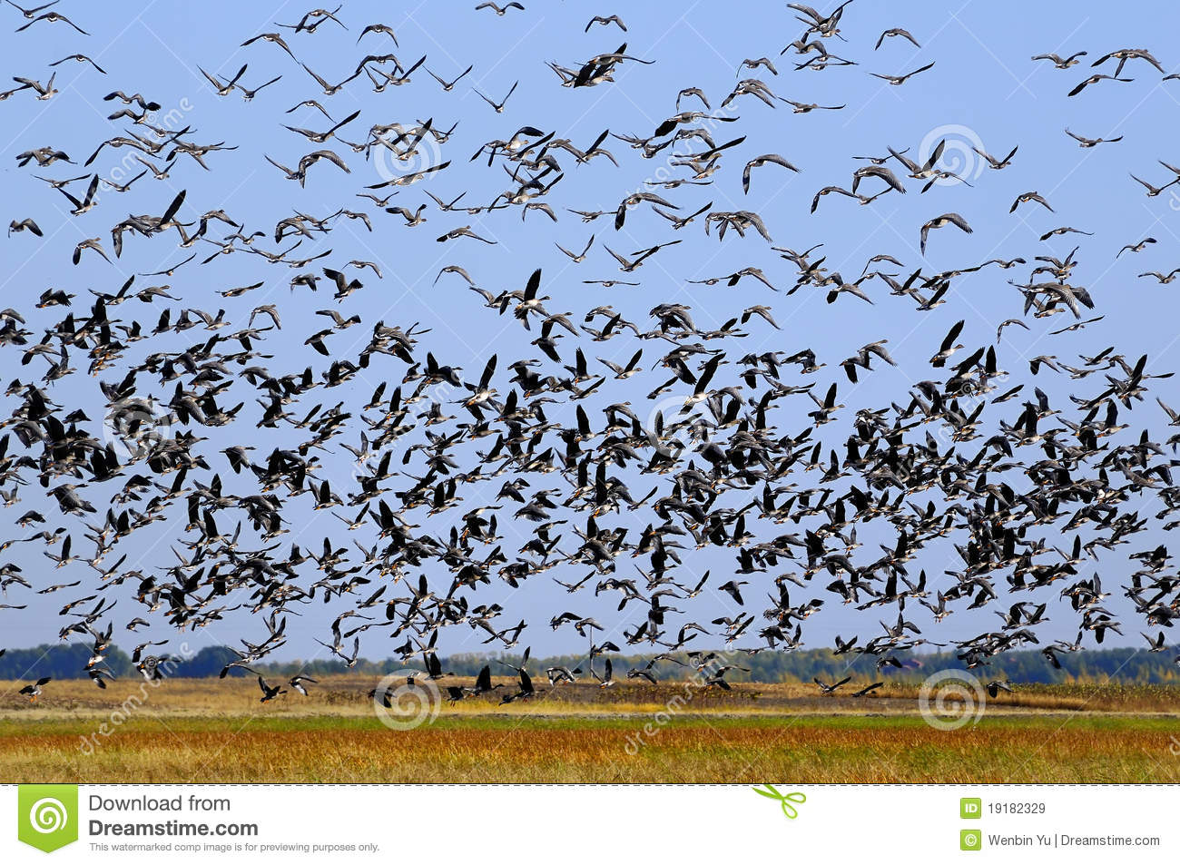 Flying Birds Free Stock Photos Download 3 416 Free Stock: Countless Birds Stock Image. Image Of Flying, Bird, Many