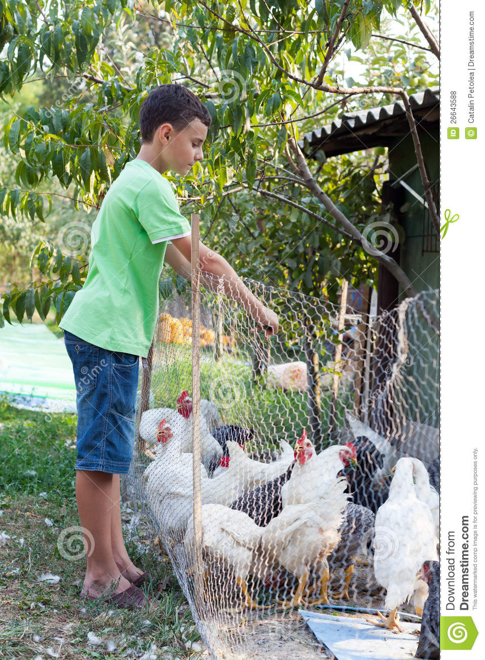 Feeding Chickens Natural Food