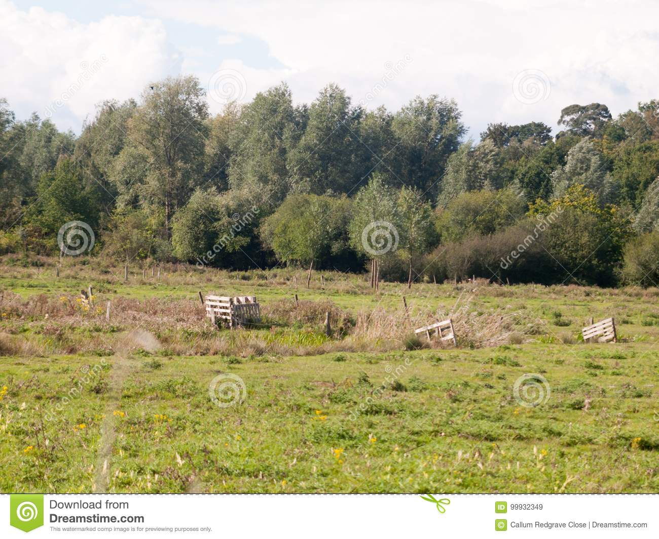 Country Farm Land Scene Empty Grass Trees And Sky Summer Light Stock
