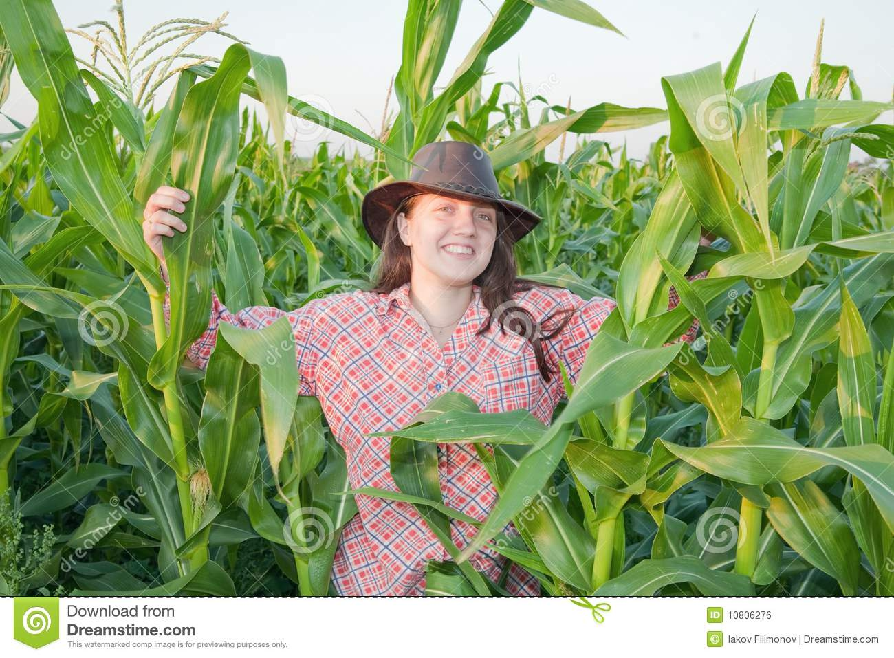 Country Girl In Corn Field Royalty Free Stock Image ...