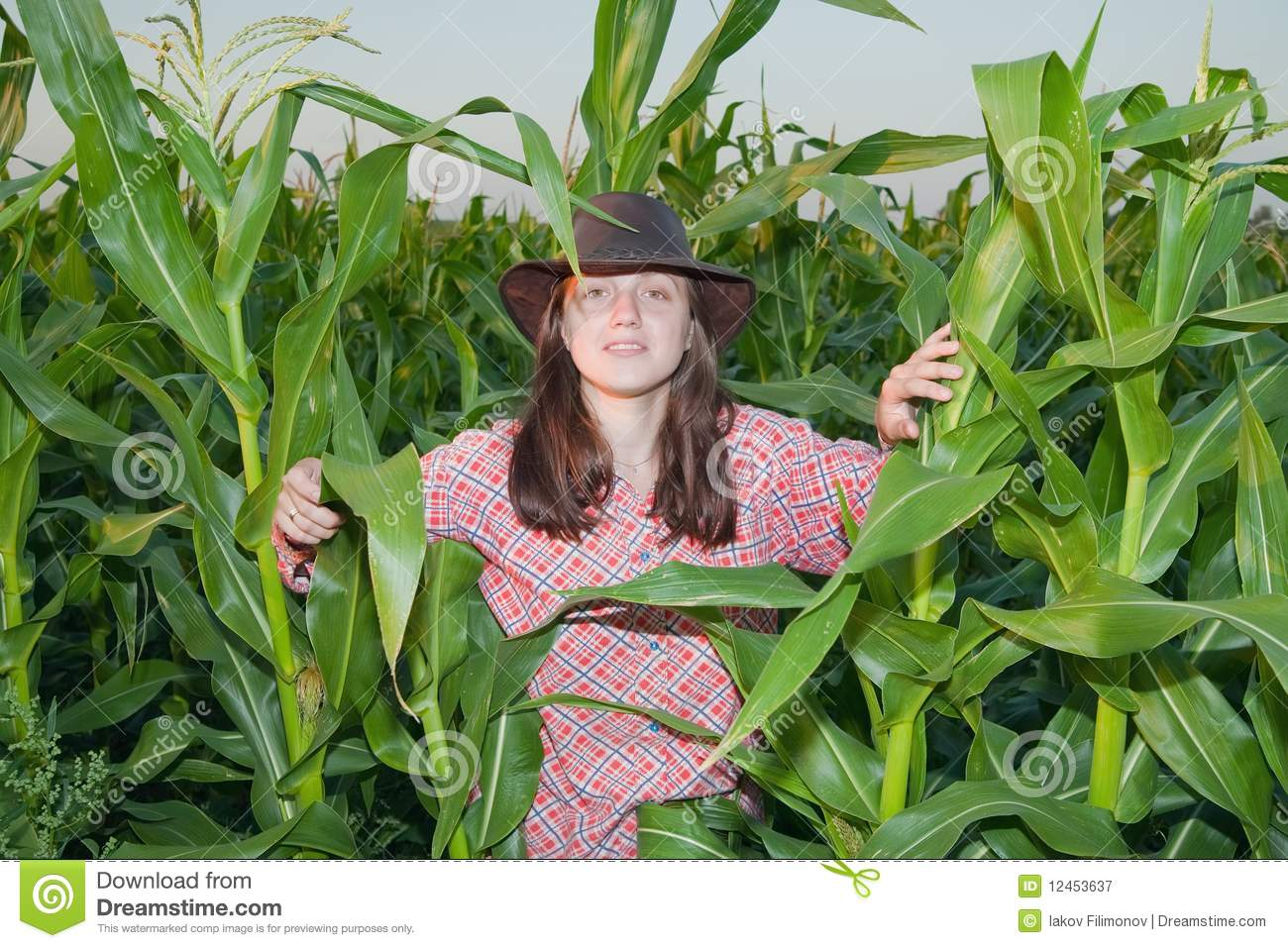 Country Girl In Corn Field Royalty Free Stock Photography ...