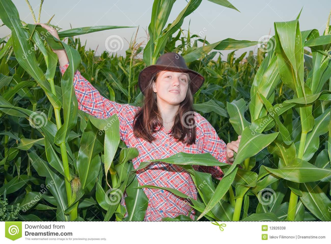 Country Girl In Corn Field Royalty Free Stock Photos ...