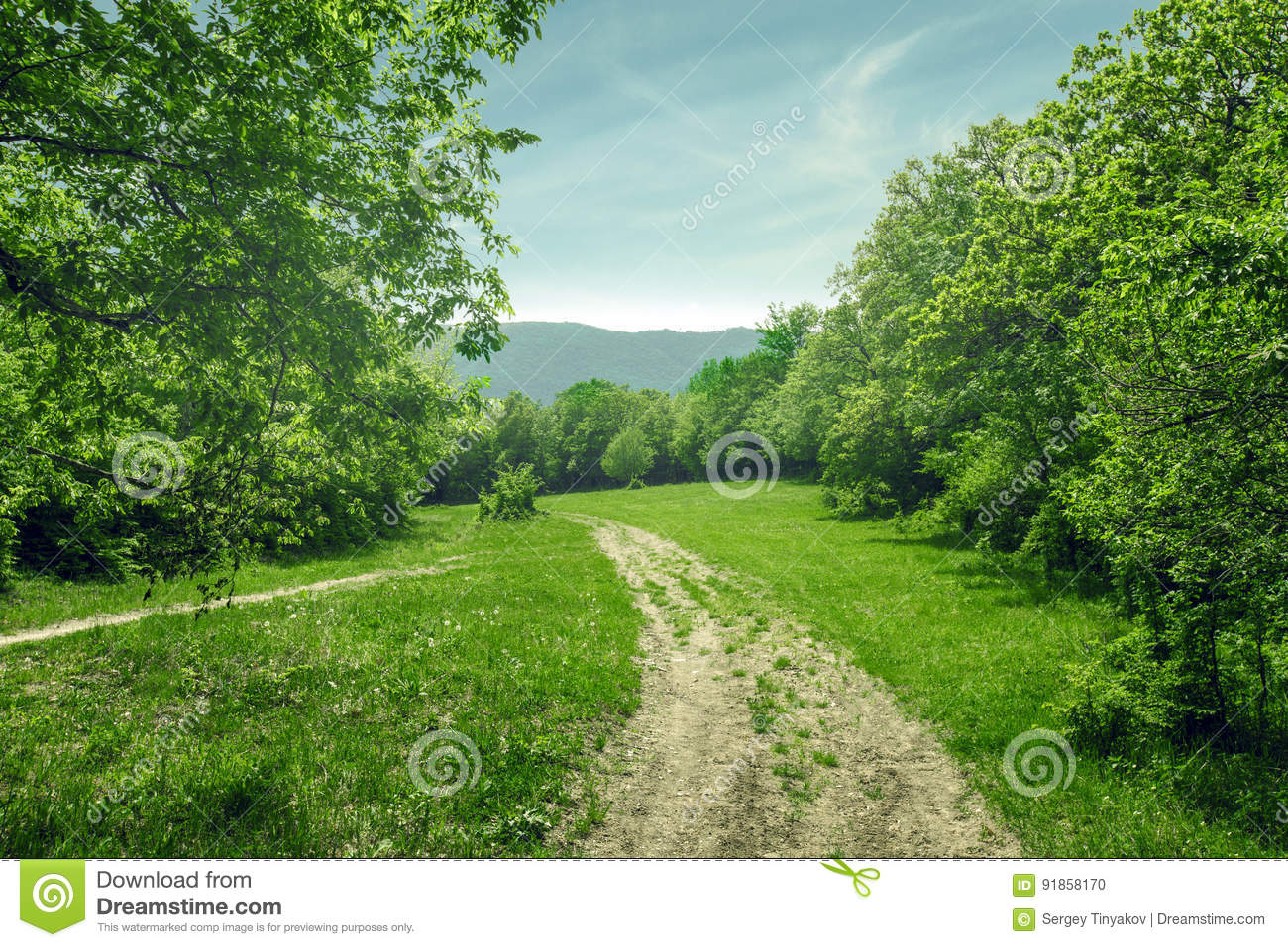 Download Country Landscape, Dirt Road In The Forest Glade, Sunny Summer Day Stock Photo - Image of rural, bright: 91858170