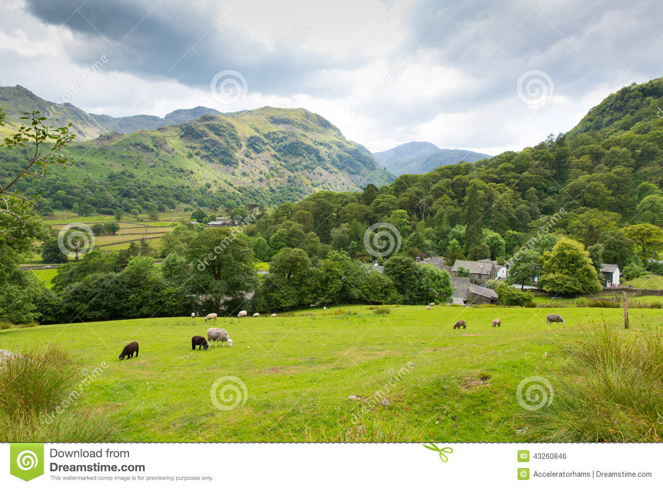 Country scene sheep in field Seatoller Borrowdale Valley Lake District Cumbria England UK