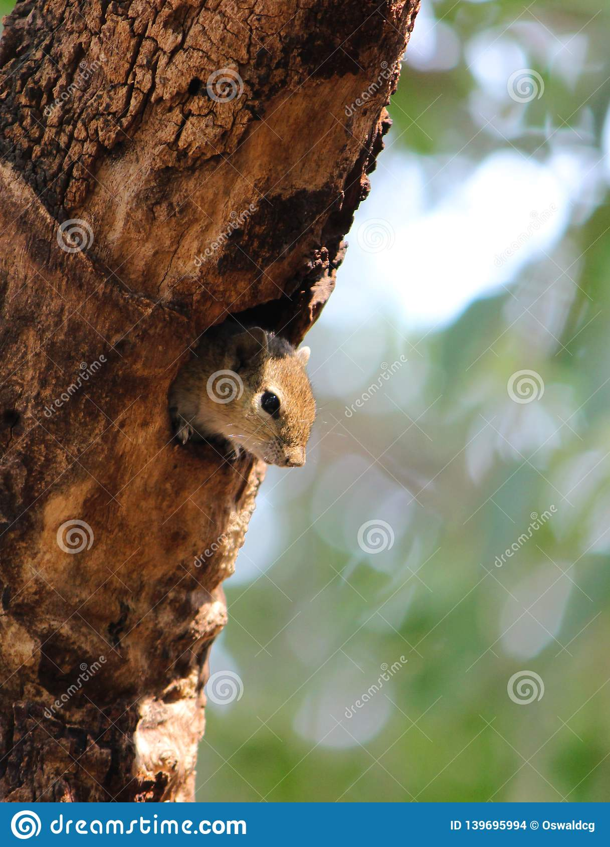 Baby Squirrel on a Tree Hollow