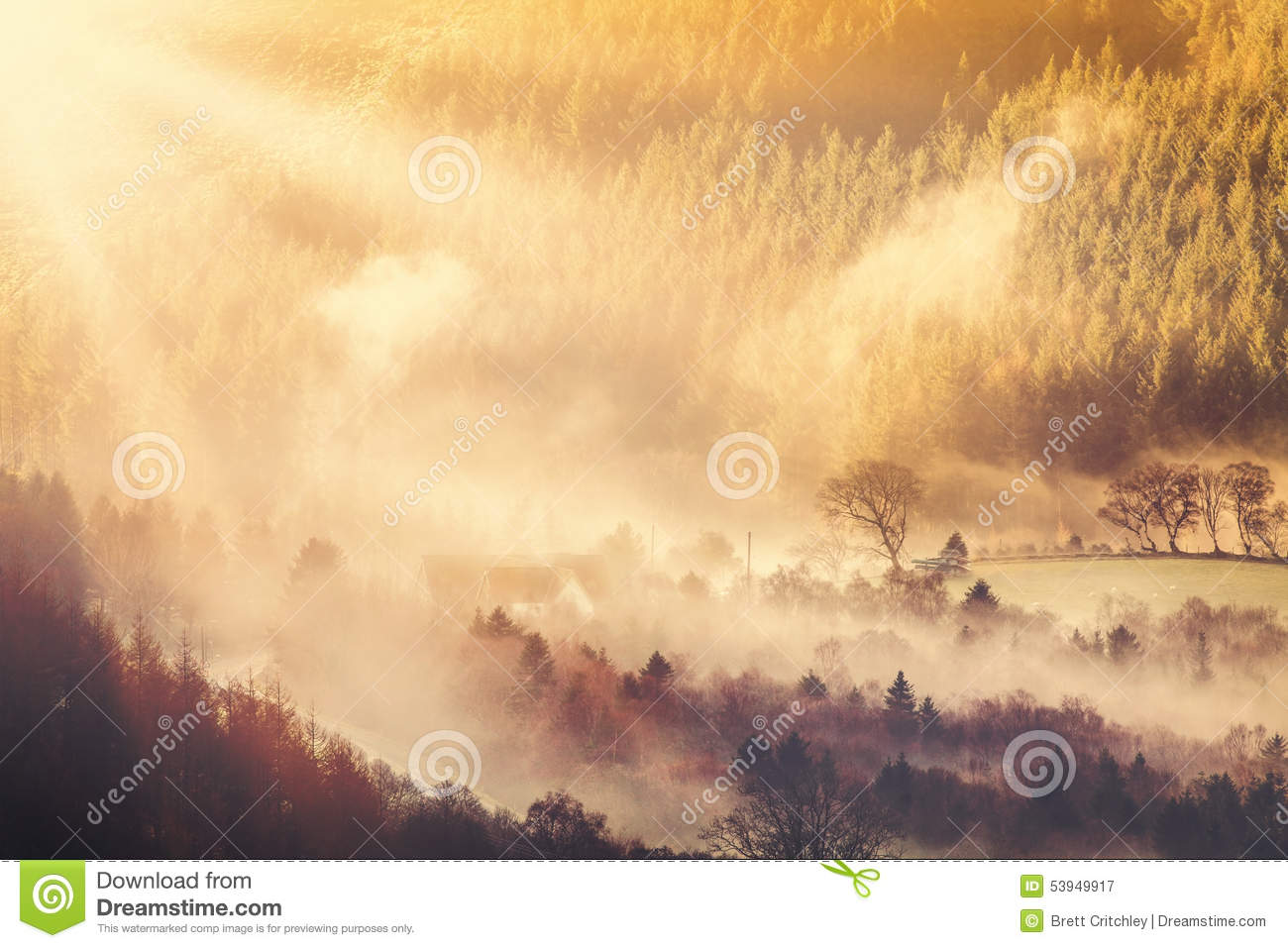 Countryside sunrise and mist