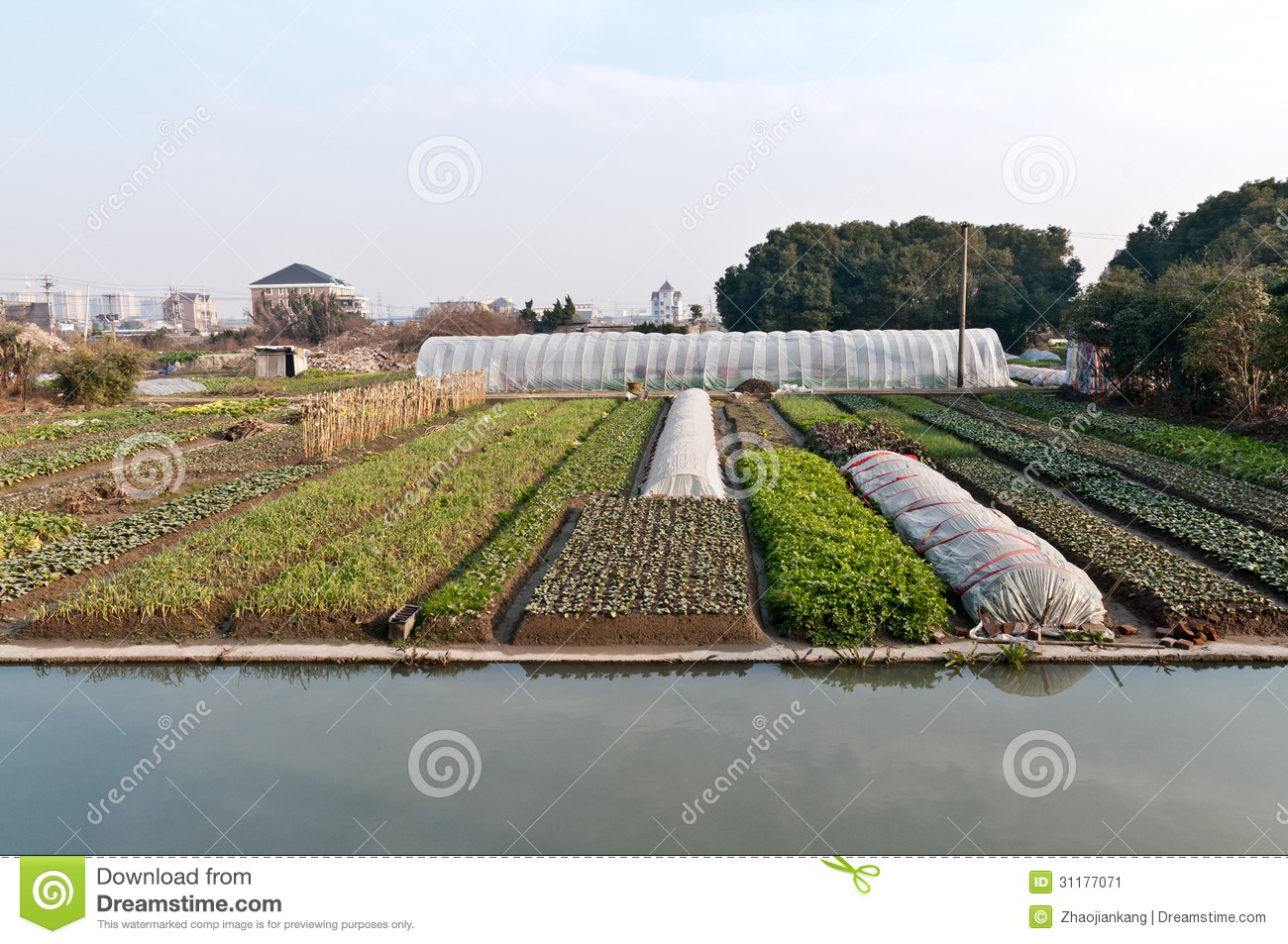 Countryside vegetable garden stock image image 31177071 - Countryside dream gardens ...