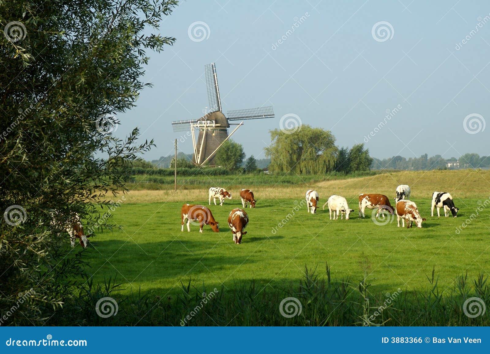 Countryview del laminatoio di vento
