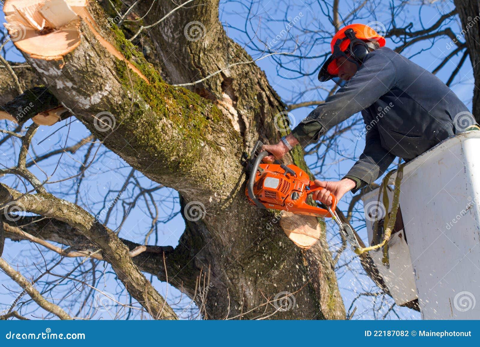 coupe de branches d 39 arbre photo stock image du chapeau 22187082. Black Bedroom Furniture Sets. Home Design Ideas