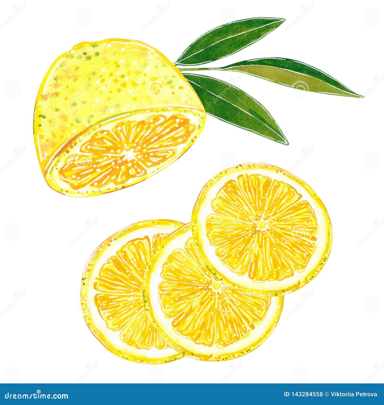 Coupe de citron dans l ensemble de clipart (images graphiques) de tranches Illustration tirée par la main d aquarelle