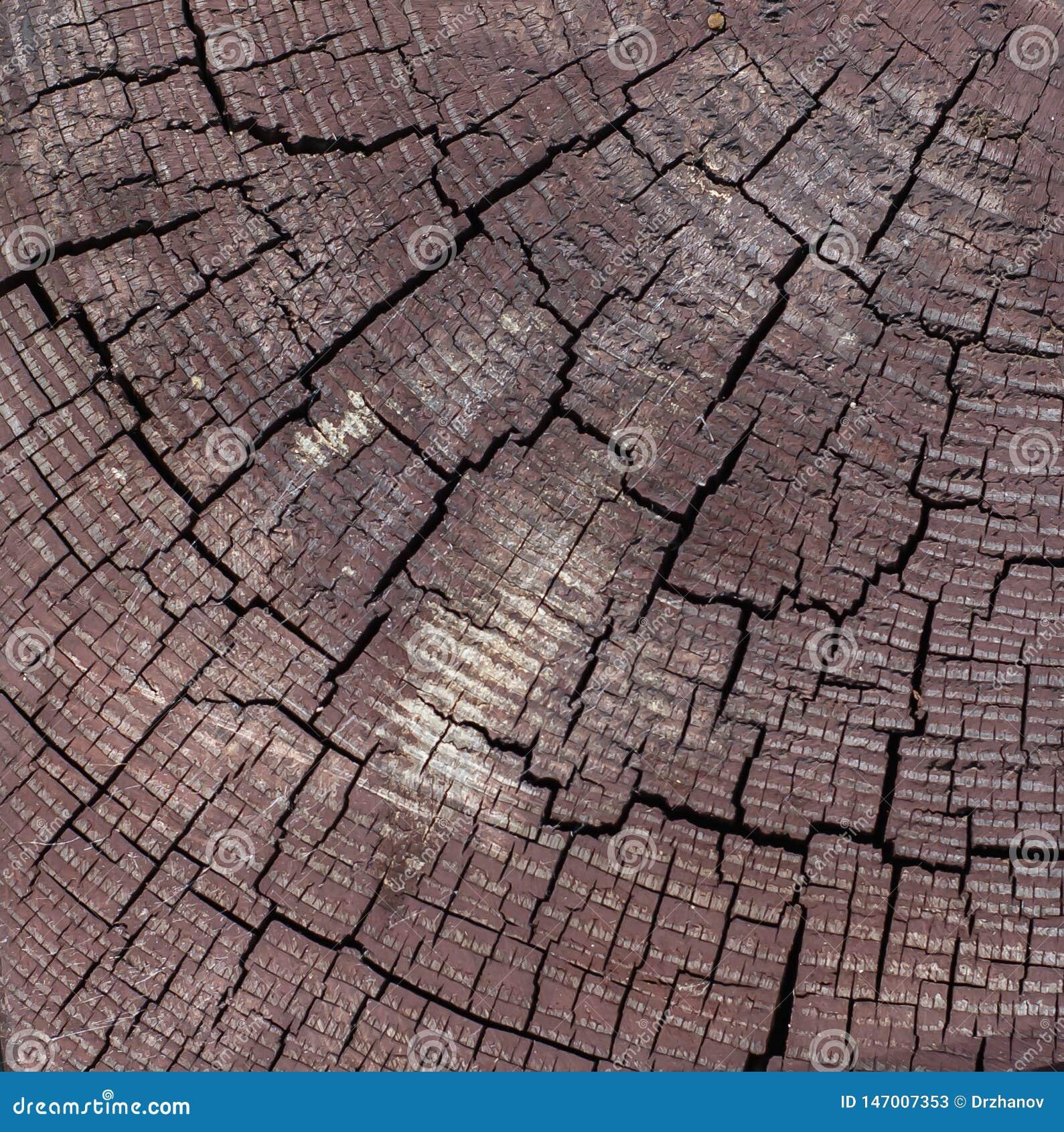 Coupe en bois de cheville de Brown de place avec les fissures noires