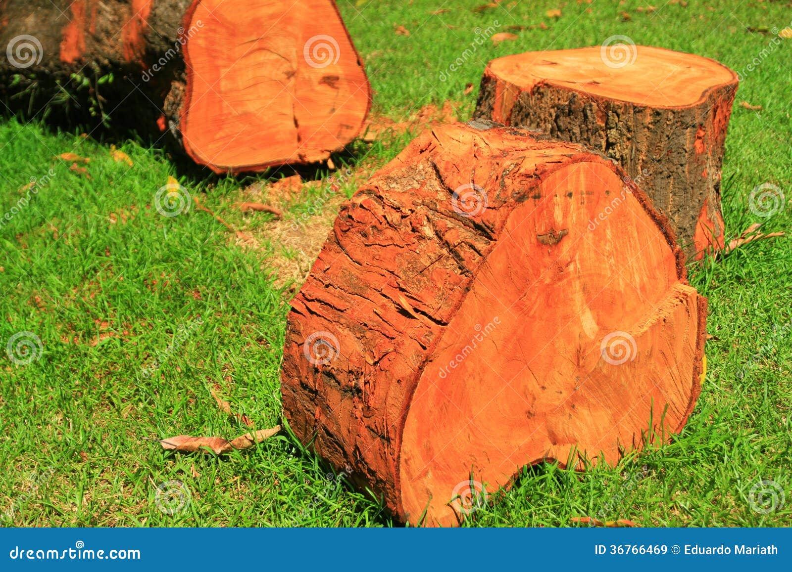 coupe en bois rouge d 39 arbre images libres de droits image 36766469. Black Bedroom Furniture Sets. Home Design Ideas