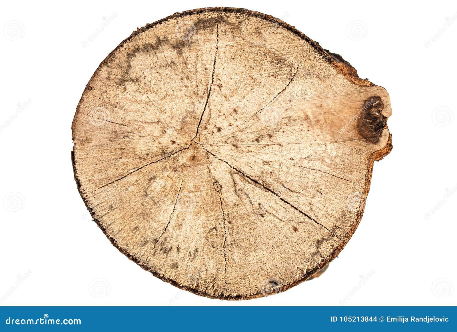 Coupe ronde de tronçon d arbre de hêtre avec des anneaux d isolement sur la vue supérieure de forme blanche de fond