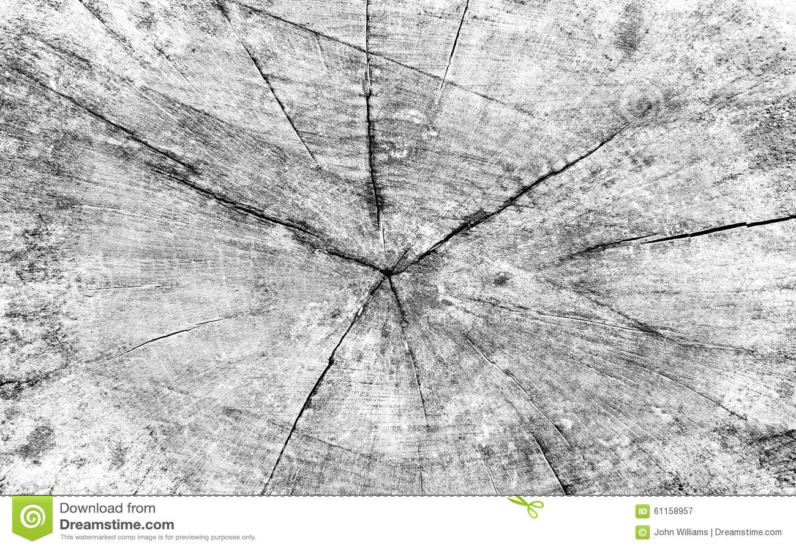 Coupez la section transversale de tronc d 39 arbre photo - Coupe transversale d un tronc d arbre ...