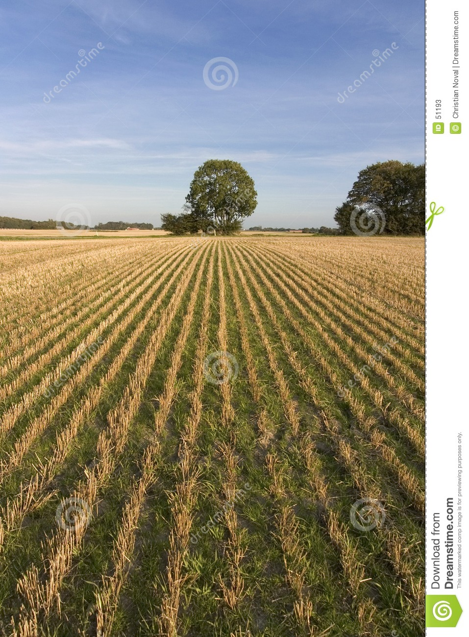 Download Coupez la zone image stock. Image du agriculture, arbre - 51193