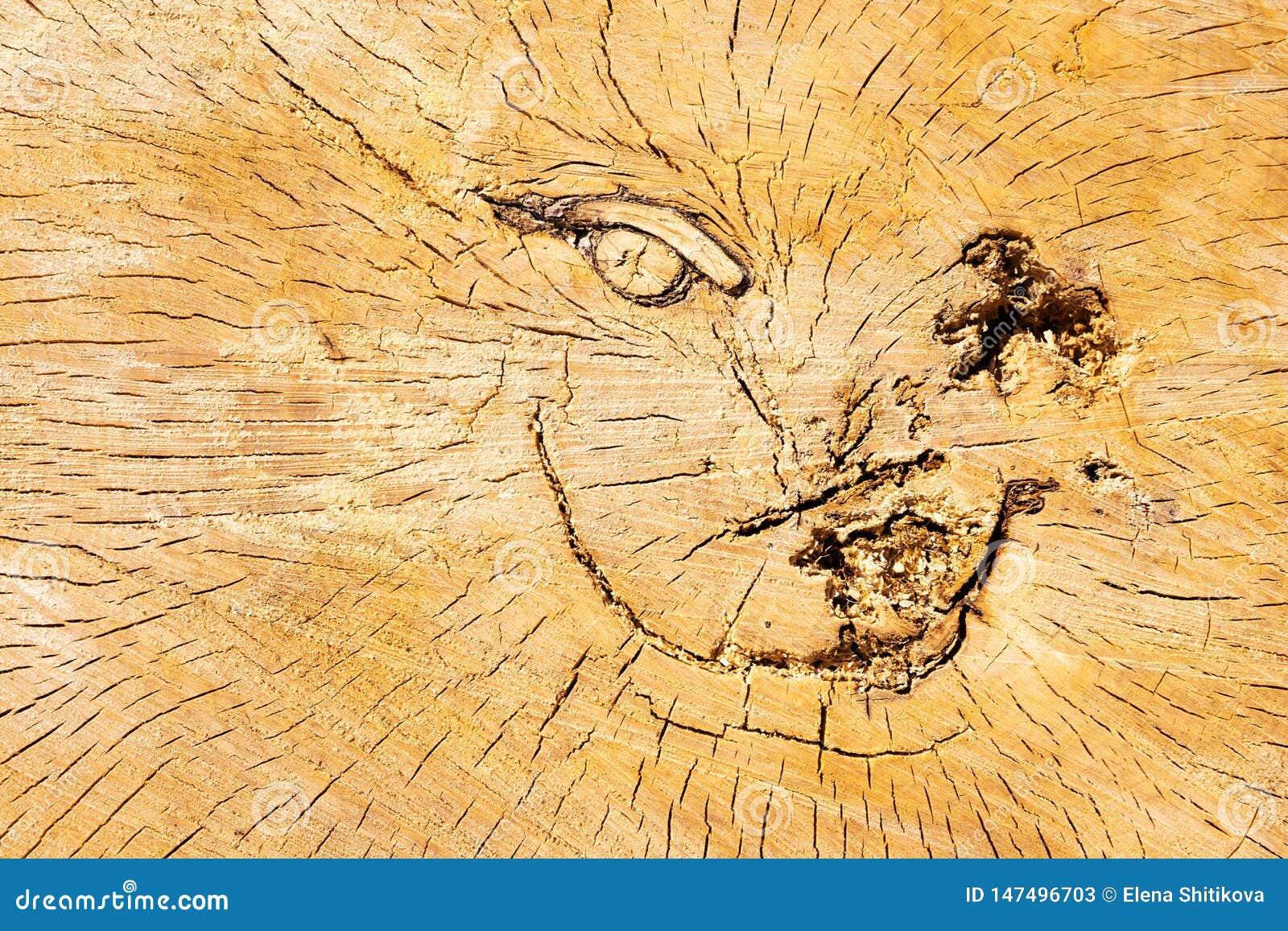 Coupez le logarithme naturel La surface criqu?e Texture de tron?on Visage de sourire