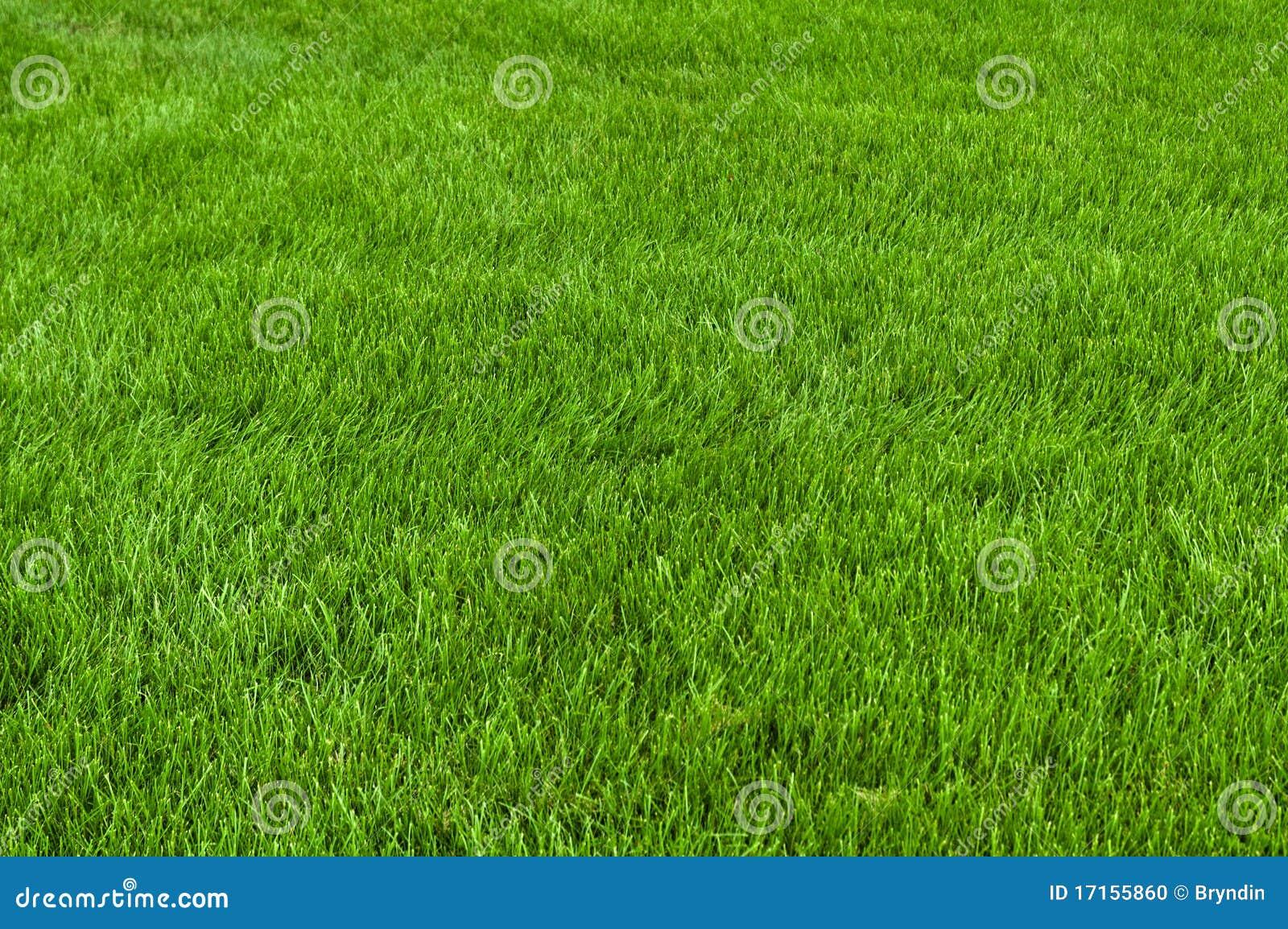 Coupez soigné l herbe