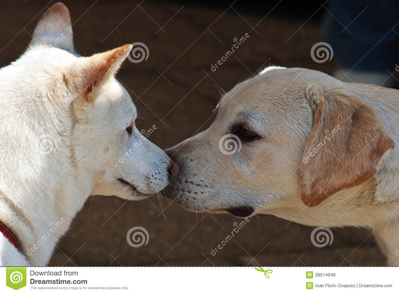 Couple canine 3