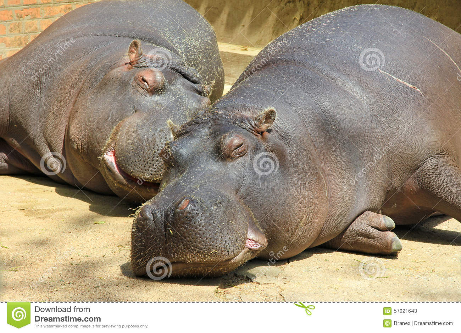 Fat hippo and a small gorilla - 1 part 1