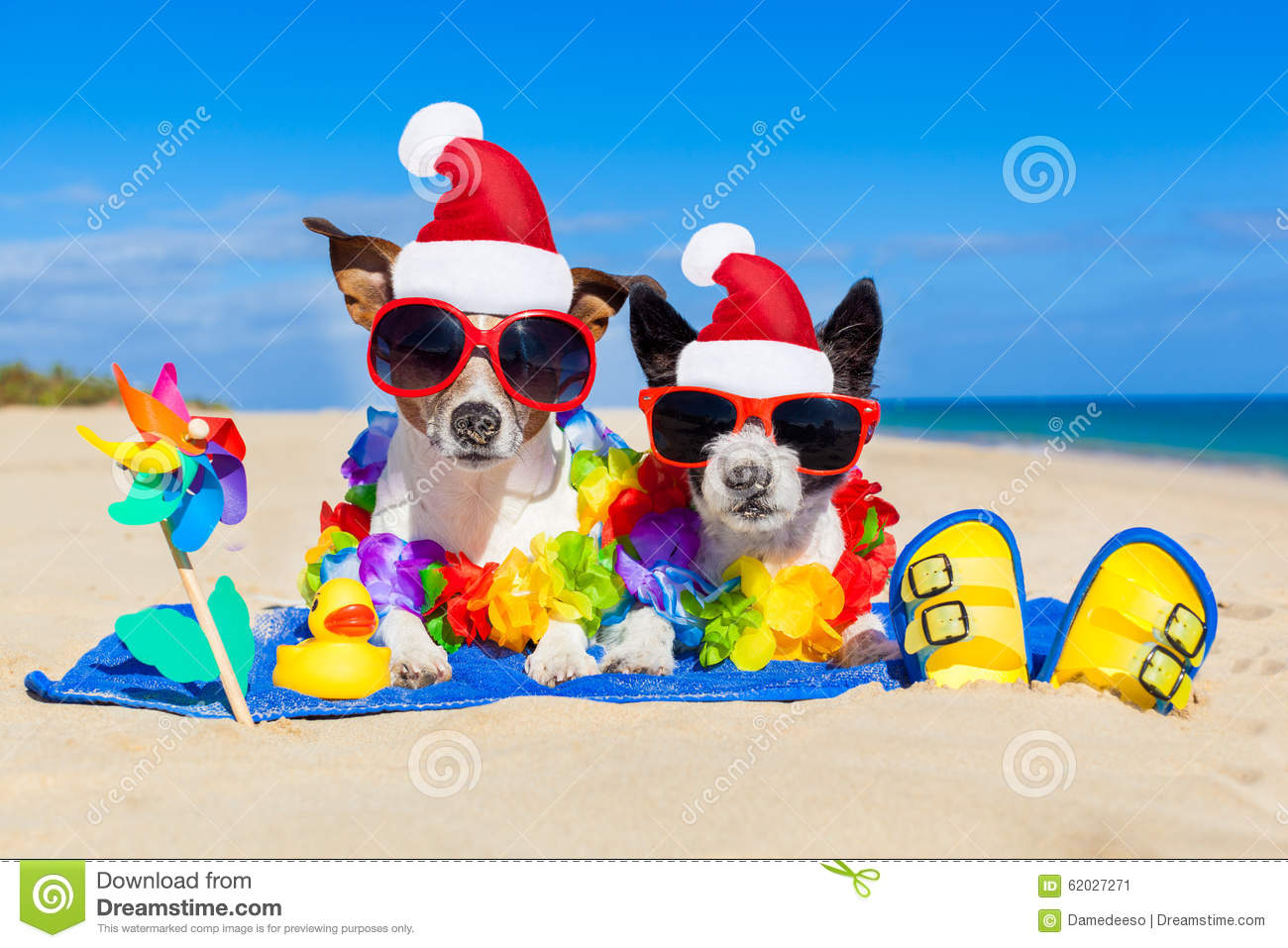 couple of dogs on christmas summer vacation - Summer Christmas