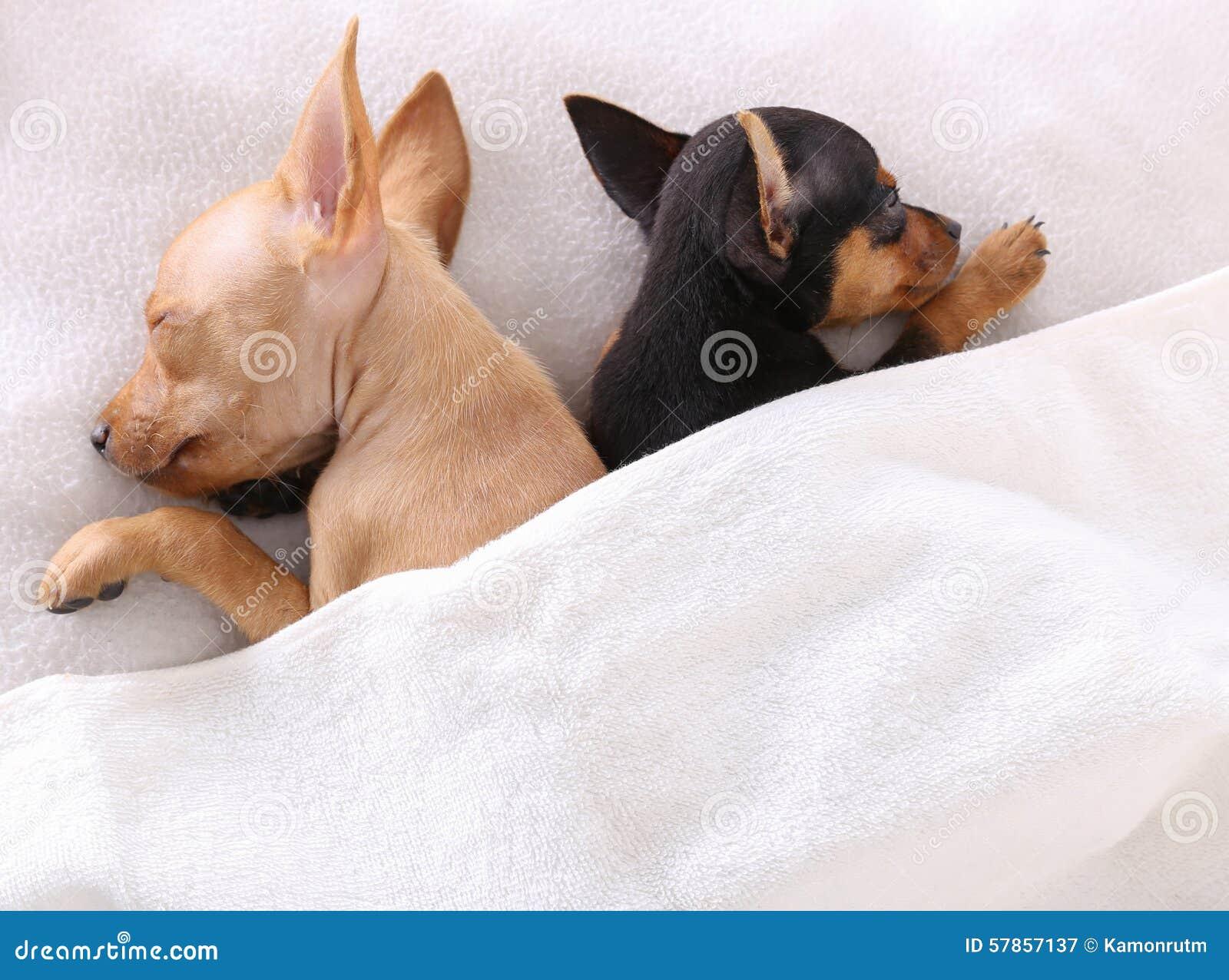 Dog Sleeping Under Bed Sick