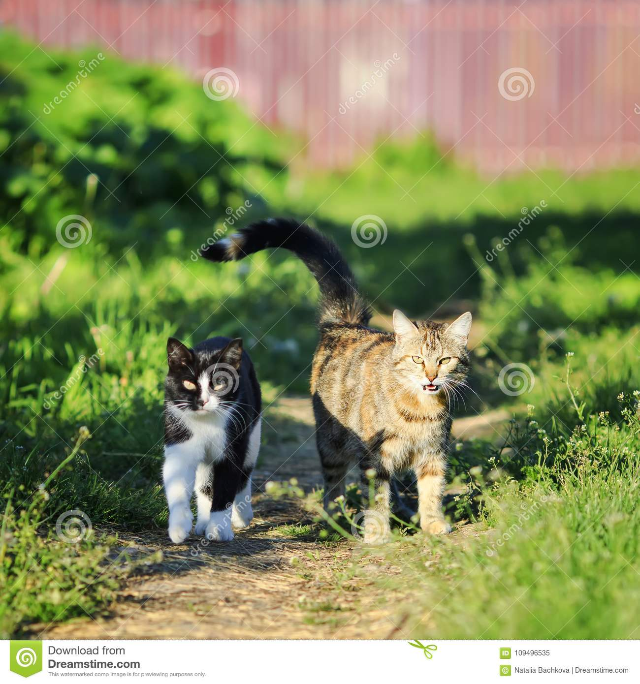 Couple of funny cute cats walking along the path in the spring