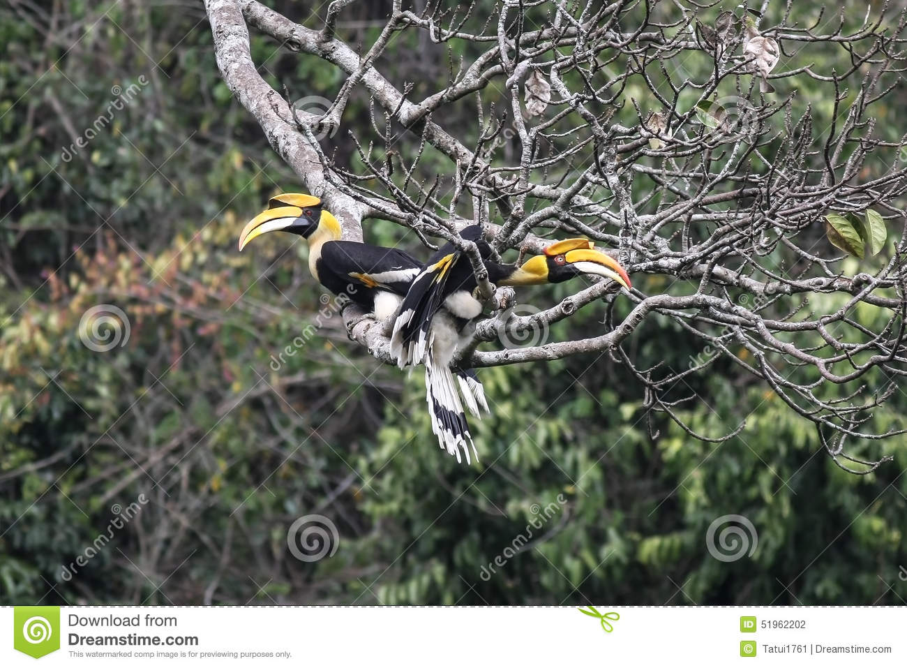 Royalty Free Stock Image London Girl Image16916206 additionally Private Screening Room likewise Stock Photo Japanese Gate Image24496810 furthermore Royalty Free Stock Image Happy Asian Family Image1522736 likewise Stock Photo Couple Great Hornbill Nature Thewild Kaeng Krachan National Park Thailand Image51962202. on asian architecture design