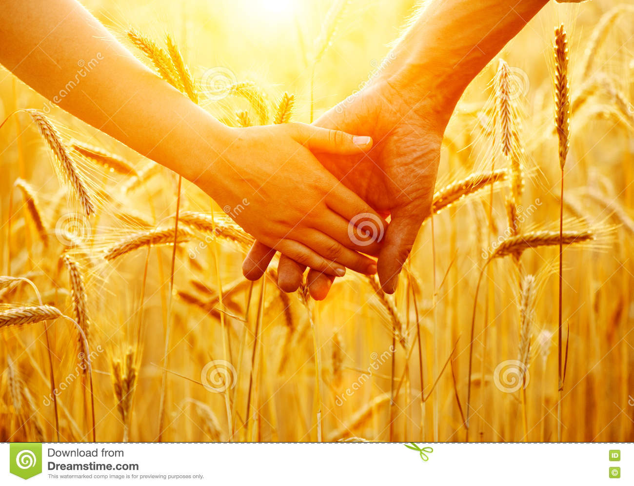 Couple holding hands and walking on golden wheat field